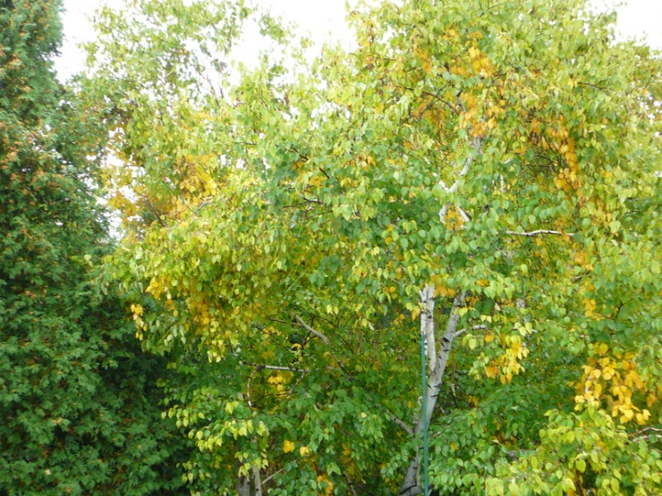 trees in fall from flat roof